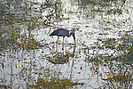 Yala National Park Sri Lanka<br />