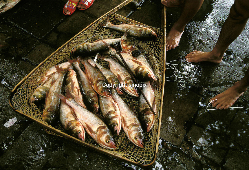 AGRICULTURE/FOOD MARKET: ANIMAL/FISH: GUANGDONG, GUANGZHOU, CHINA<br /> Fresh fish unloaded from boats on Pearl River on way to market in Guangdong, Guangzhou(Canton), China.<br /> Photo by Mark Henley/sinopix<br /> &copy;sinopix