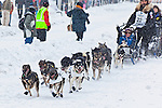 Iditarod Ceremonial Start in downtown Anchoragre, Southcentral Alaska, Winter.