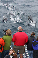 qc71901-D. people on eco-tour boat trip watching Common Dolphins (Delphinus delphis). California, USA, Pacific Ocean. .Photo Copyright © Brandon Cole. All rights reserved worldwide.  www.brandoncole.com..This photo is NOT free. It is NOT in the public domain. This photo is a Copyrighted Work, registered with the US Copyright Office. .Rights to reproduction of photograph granted only upon payment in full of agreed upon licensing fee. Any use of this photo prior to such payment is an infringement of copyright and punishable by fines up to  $150,000 USD...Brandon Cole.MARINE PHOTOGRAPHY.http://www.brandoncole.com.email: brandoncole@msn.com.4917 N. Boeing Rd..Spokane Valley, WA  99206  USA.tel: 509-535-3489
