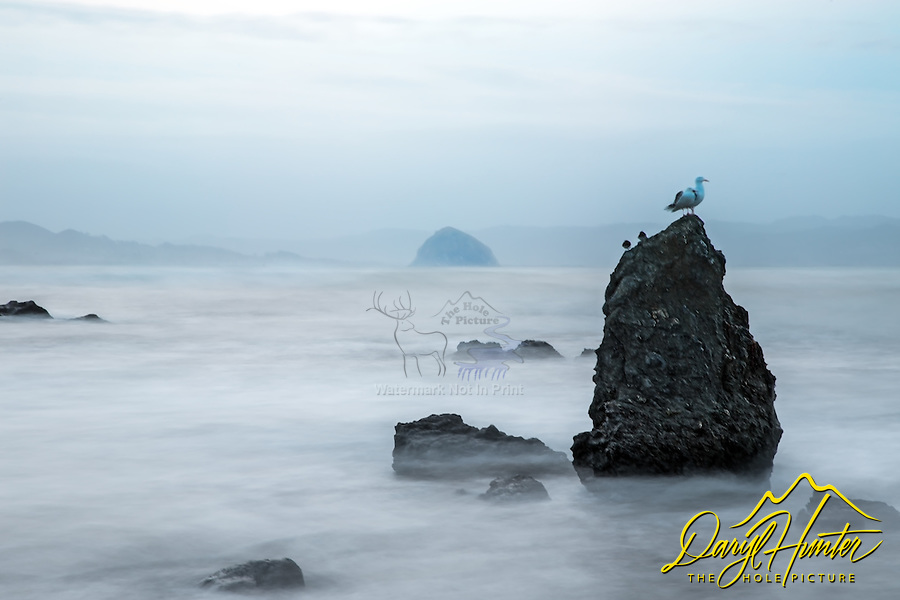 Sea gull on early on an inclement weather day.  Morro Rock on the Central coast is in the background.  A long exposure smoothed out the water of an angry sea.