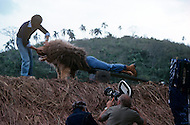 Vassouras, district of Rio de Janeiro, Brazil. 1981.  A family in Africa is besieged by a group of lions, driven mad by the drought. They have to survive multiple attacks but some of their colleagues are eaten by the lions. From the film Savage Harvest, directed by Robert E. Collins. Stunt scene of a lion attack.