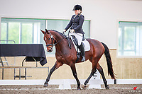 NZL-Hannah Burden rides Georgia MH during the EquiBreed 4 Year Old Future Star. 2018 NZL-Livamol FEI World Dressage Challenge. Friday 20 April. Copyright Photo: Libby Law Photography