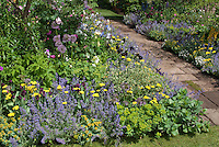 Garden stone path walkway through lush flowering garden with lots of different flowers, Nepeta Walker's Low catmint in flower
