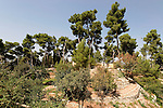 Israel, the Upper Galilee. The Citadel Garden in Safed
