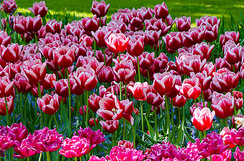 Keukenhof Gardens, Lisse, The Netherlands
