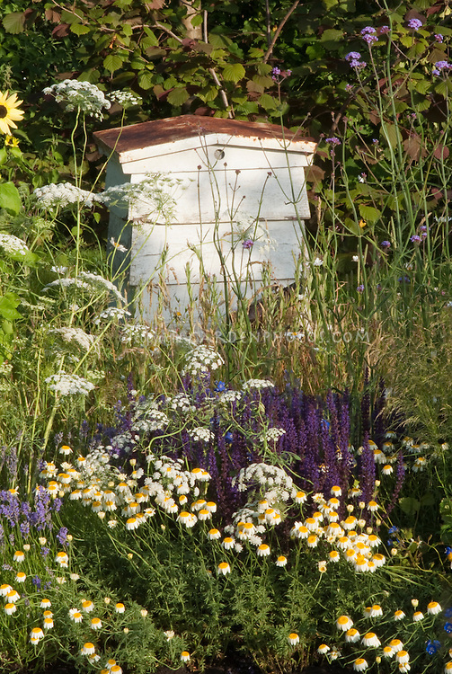 Beehive integrated into the garden with flowers and wildflowers nearby, Warre beehive type