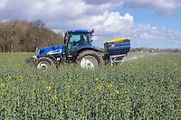 Applying nitrogen (nitram 34.5%) to oil seed rape - Norfolk, March