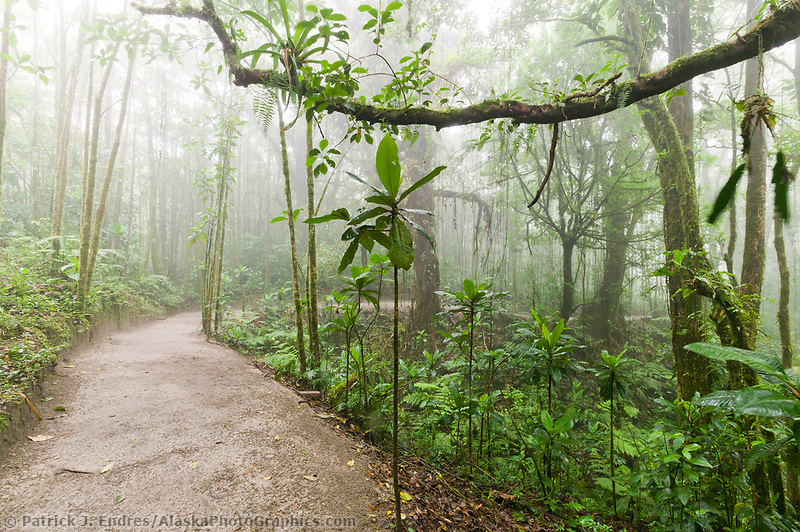 Monte Verde Cloud Forest, Costa Rica, Central America