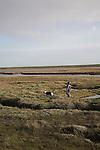 Boy and dog walking over salt marsh, Shingle Street Orford Ness spit, Suffolk, England