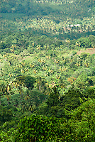 View of Saint Lucia tropical rainforest from a zip line lift chair.