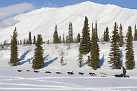 Rick Swensons team mushes on Puntilla Lake outside Rainy Pass Chkpt 2006 Iditarod Alaska Winter