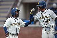 Michigan Wolverines second baseman Ako Thomas (4) is greeted by teammate Jordan Nwogu (42) after scoring against the Indiana State Sycamores on April 10, 2019 in the NCAA baseball game at Ray Fisher Stadium in Ann Arbor, Michigan. Michigan defeated Indiana State 6-4. (Andrew Woolley/Four Seam Images)