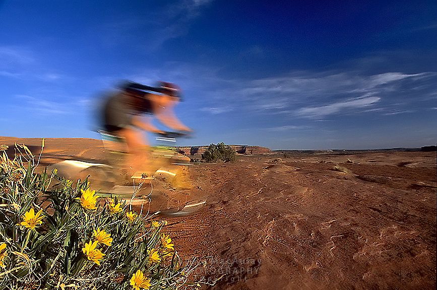 Speeding mountain biker and yellow mule's ear flowers, Bartlett Wash, Moab, Utah