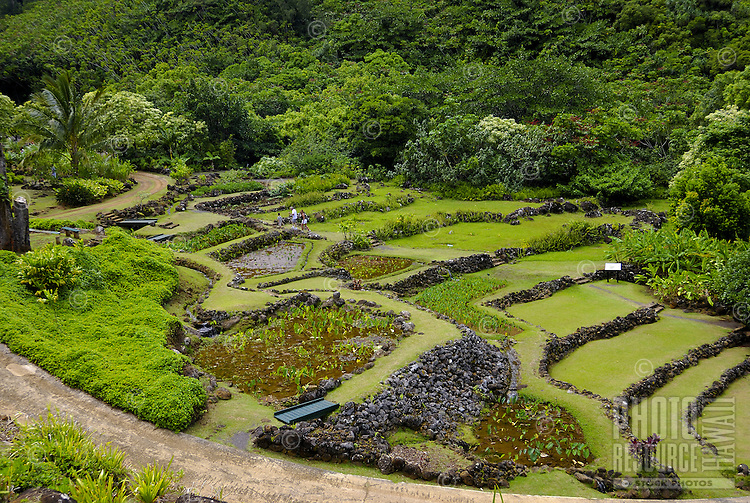 Tourists stroll through the 700 year old terraced rock walls surrounded by lush green foliage and a lo'i pond,     (kalo/taro, species colocasia esculenta) a sacred Native Hawaiian plants and food source. Photographed at Limahuli Gardens, on Kauai's