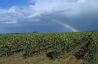 Europe/France/Poitou-Charentes/16/Charente/Env de Cognac : Le vignoble et arc-en-ciel