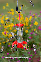 01162-12620 Ruby-throated Hummingbirds (Archilochus colubris) at feeder near flower garden,  Marion Co.  IL