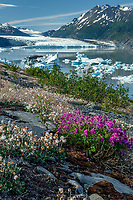 Summer Landscape of ice bergs floating in Inner Lake George and wildflowers on shore with Colony Glacier in Background. <br /> Photo by Jeff Schultz/SchultzPhoto.com  (C) 2018  ALL RIGHTS RESERVEDThurmer Tours July 2018