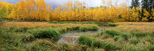 Autumn wetland near Telluride, Colorado, Uncompahgre National Forest, Colorado, USA