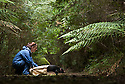 Field officer of the Save the Tassie Devil project releases a Tasmanian devil in a quiet fern forest.  <br />