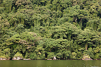 The dense jungle reaching the waterline of the island reserve Nosy Mangabe, Madagascar