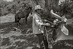 Vinales, Cuba:<br /> Tobacco farmer hitching oxen on a farm near Vinales