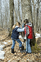 Young girls checking a sugar maple sap bucket