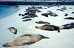 Sea lion galapagos beach sleeping resting colony