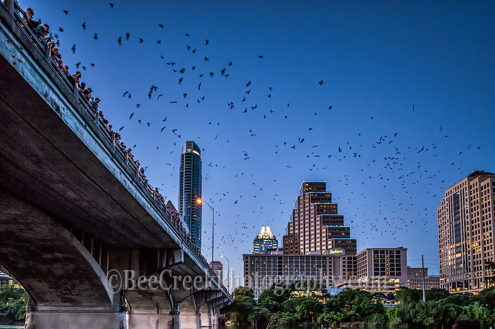 Austin bat watch is a favorite thing to do for most of the year.  People come down and stand on the Congress Ave Bridge and watch as millions of bat come out around dusk to feed on the insects.  It is a spectcal to be seen and the bats are nice too!