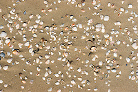 various shells laying on a sandy beach