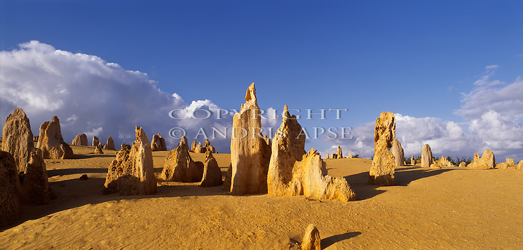 Sandstone formations in Nambung National Park.The Pinnacles. Western Australia. Australia.