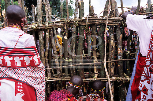 Lolgorian, Kenya. Siria Maasai; women building the magic house in the manyatta for the Eunoto coming of age ceremony.