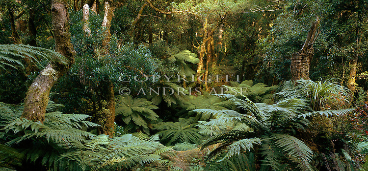 Native forest. Te Urewera National Park. Hawkes Bay Region. New Zealand.