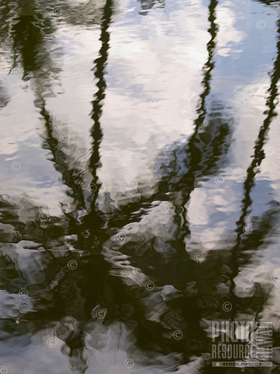 A reflection of palm trees in a pool of rippling water on the Big Island.