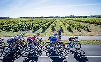 speeding peloton in the race finale, prepping for a bunch sprint<br /> <br /> Stage 10 from île d'Oléron (Le Château-d'Oléron) to Île de Ré (Saint-Martin-de-Ré)(169km)<br /> <br /> 107th Tour de France 2020 (2.UWT)<br /> (the 'postponed edition' held in september)<br /> <br /> ©kramon