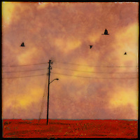 Mixed media painting with photography of sunset sky and birds with telephone poles.