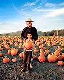 USA, California, senior man standing with his grandson in a pumpkin patch, Half Moon Bay, Bob's Pumpkin Farm