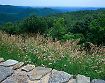 Shenandoah National Park, VA<br /> Tall grasses border a stone wall at Thornton Overlook with the layered Shenadoah Mountains in the distance