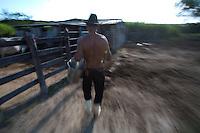 Esmeraldas_MG, Brasil...Criacao de gado na comunidade rural da Laginha, Esmeraldas, Minas Gerais...A cattle ranching in rural community Laginha, Esmeraldas, Minas Gerais...Foto: JOAO MARCOS ROSA / NITRO