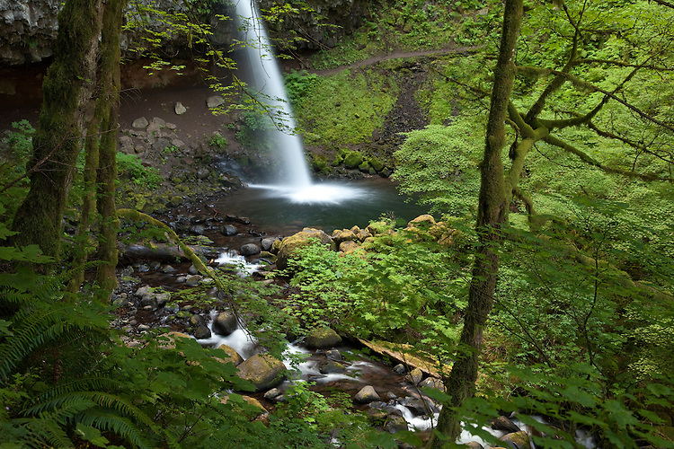 Horsetail Falls is located along the Columbia River Gorge of Oregon