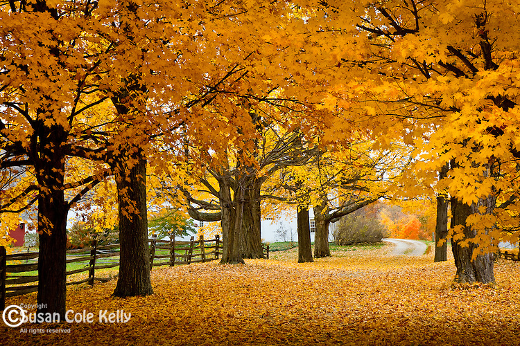 Fall foliage on a farm road in Hollis, NH, USA