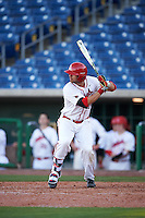 Ball State Cardinals pinch hitter Maverick Bacon (14) at bat during a game against the Louisville Cardinals on February 19, 2017 at Spectrum Field in Clearwater, Florida.  Louisville defeated Ball State 10-4.  (Mike Janes/Four Seam Images)