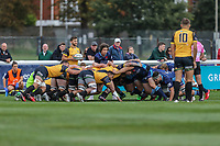 Match action during the Greene King IPA Championship match between London Scottish Football Club and Ealing Trailfinders at Richmond Athletic Ground, Richmond, United Kingdom on 8 September 2018. Photo by David Horn.