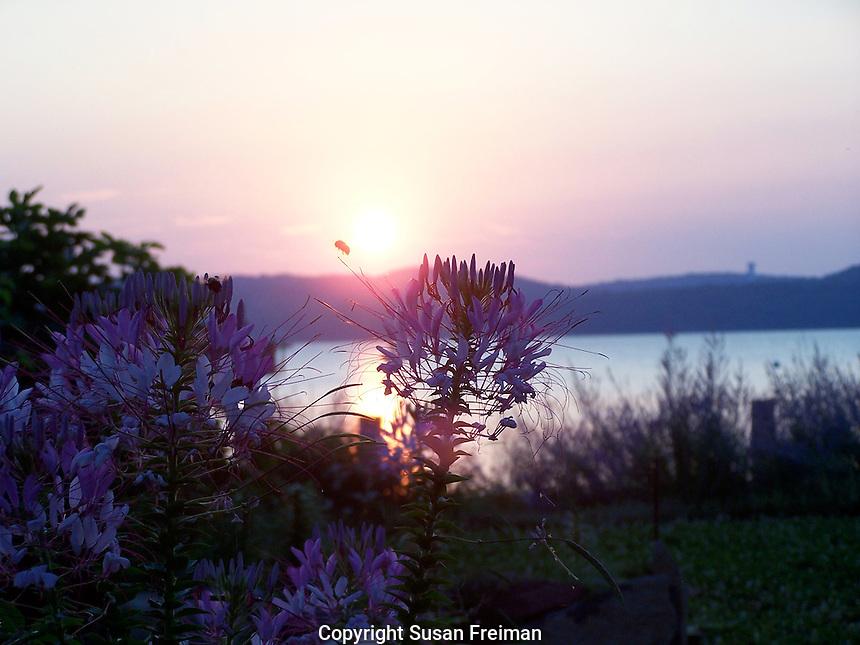 Sunrise, July, Joan Gussow's garden