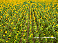 63801-11307 Sunflower field-aerial Jasper Co.  IL