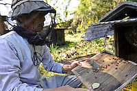 Beekeeper Masahiro Tominaga opens a hive at his farm, Inadani, Nagano Pref, Japan, September 24, 2011. Inadani is home to Japanese honey-bee farms. The bees feed off red-soba flowers and the exceptionally high-quality honey they produce is sold at a premium.