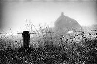 Europe/France/Auvergne/15/Cantal/Massif du Puy Mary Buron dans le brouillard aux environs de Salers -Parc Naturel Régional des Volcans d'Auvergne