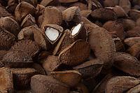 A Bertholletia excelsa, popularmente conhecida como castanha-do-pará, castanha-do-acre, castanha-do-brasil, tocari e tururi é uma árvore de grande porte, muito abundante no norte do Brasil e na Bolívia, cujo fruto (ouriço) contém a castanha, que é sua semente1 É uma árvore da família botânica Lecythidaceae, nativa da Floresta Amazônica.<br /> Belém, Pará, Brasil.<br /> Foto Eurico Alencar<br /> 09/2008