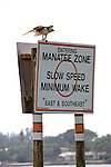 Manatee Sign & Osprey Sitting On It