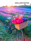 Assaf, CUTE ANIMALS, LUSTIGE TIERE, ANIMALITOS DIVERTIDOS, teddies, paintings,+Basket, Bicycle, Bicycles, Bike, Bikes, Childhood, Color, Colour Image, Cute, Dusk, Floral, Flower, Flowers, Lavender, Lavend+er Field, Photography, Romace, Romantic, Sun, Sun Beam, Sun Beams, Sun Rays, Sunset, TeddyBear, Teddy Bears, Toy, Toys, Twili+ght, Wicker Basket,Basket, Bicycle, Bicycles, Bike, Bikes, Childhood, Color, Colour Image, Cute, Dusk, Floral, Flower, Flower+s, Lavender, Lavender Field, Photography, Romace, Romantic, Sun, Sun Beam, Sun Beams, Sun Rays, Sunset, TeddyBear, Teddy Bear+,GBAFAF20130708A,#ac#, EVERYDAY ,photos,photo